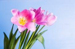 Букет крупного плана красивый нежных розовых тюльпанов с падениями wa Стоковое Изображение RF