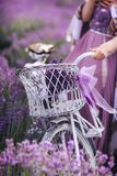 Букет лаванды в корзине на велосипеде в поле лаванды девушка держа velispette снаружи стоковая фотография rf
