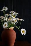 Букет маргаритки в цветках темной предпосылки вазы глины Брайна белых Стоковое Фото