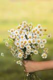 Букет маргариток wildflowers дает child& x27; рука s Стоковые Изображения RF