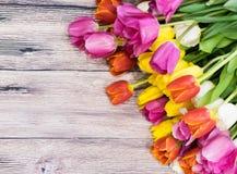 Букет много розовых тюльпанов желтеет красный цвет и белизну и пинк Стоковое Изображение