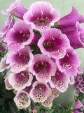 Букет довольно мягко белых и фиолетовых цветков Стоковые Фото