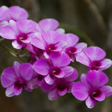 Букет орхидей фиолетовый красивый Стоковые Изображения