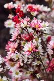 Букет от красных и белых стоцветов на рынке цветка Стоковое Изображение RF