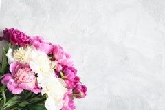 Букет пионов на серой предпосылке вектор детального чертежа предпосылки флористический Стоковые Изображения RF
