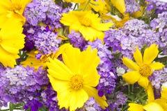 букет предпосылки цветет одичалое Стоковые Изображения RF
