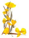 Букет применения сухих листьев радужки и желтых цветков Стоковое Изображение