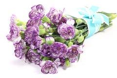 Букет пурпуровых гвоздик Стоковая Фотография