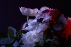 Букет различных белых цветков с красным светом Стоковое Изображение RF