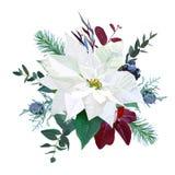 Букет рождества аранжировал от белого poinsettia, parvifolia иллюстрация штока