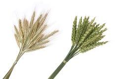 Букет рожи и пшеницы Стоковые Фотографии RF