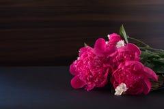 Букет розового пиона на темной предпосылке Стоковые Фото