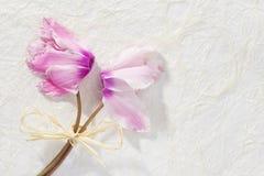Букет розового cyclamen Стоковые Изображения RF