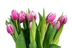 Букет розовых тюльпанов на белой предпосылке Стоковые Изображения