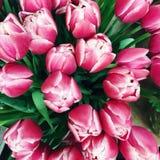 Букет розовых тюльпанов с белыми венами Стоковые Изображения RF