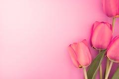Букет розовых тюльпанов с космосом для приветствуя сообщения Стоковое Изображение