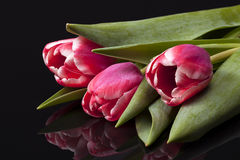Букет розовых тюльпанов цветка весны изолированных на черной предпосылке Стоковое фото RF
