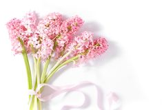 Букет розовых цветков гиацинта Стоковое Изображение