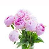 Букет розовых peonies стоковые изображения