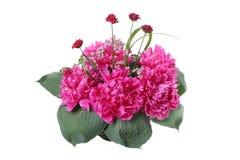 Букет розовых peonies Стоковое Фото