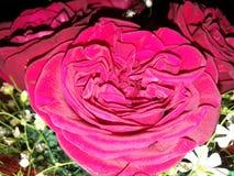Букет роз стоковые фотографии rf