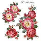 Букет роз Цветки установленные красных роз акварели иллюстрация вектора