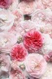 Букет роз. Стоковые Изображения