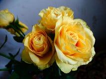 Букет роз Стоковое Фото