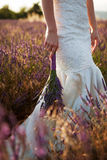 Букет свадьбы лаванды в руках невест Стоковое Изображение RF