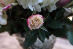Букет свадьбы белых и розовых цветков Стоковые Изображения
