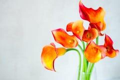 Букет свежего оранжевого Calla lilly цветет в стеклянной вазе с copyspace Стоковые Фотографии RF