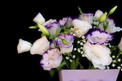 Букет свежего eustoma в cream и фиолетовых цветах на черной предпосылке стены стоковые изображения rf