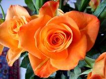 Букет свирли роз оранжевой Стоковое Фото