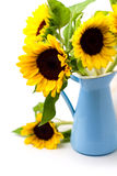 Букет солнцецвета в голубом кувшине эмали стоковое изображение