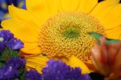 Букет солнцецвета Стоковое Изображение RF