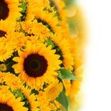 Букет солнцецветов и цветков ноготк Стоковая Фотография RF
