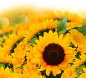 Букет солнцецветов и цветков ноготк Стоковое Фото