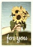 Букет солнцецветов Стоковая Фотография