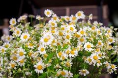 Букет стоцвета в стеклянной вазе Стоковые Фото