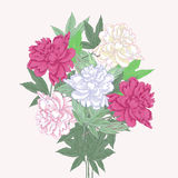 Букет с 2 розовым и белыми пионами Стоковая Фотография