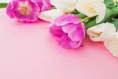 Букет тюльпанов на пастельной предпосылке крупного плана eyedroppers высокий разрешения взгляд очень вектор детального чертежа пр Стоковые Изображения