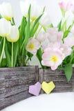 Букет тюльпанов пинка и белых в деревянной коробке и бумажные сердца желтого цвета и цвета сирени на белой предпосылке стоковая фотография rf