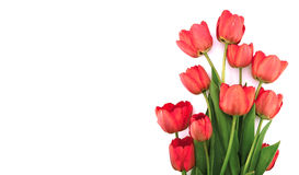 Букет тюльпанов изолированных на белой предпосылке с космосом Стоковые Фотографии RF