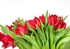 Букет тюльпанов Стоковое Изображение