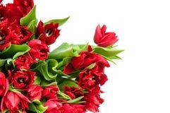 Букет тюльпанов Стоковое Изображение RF