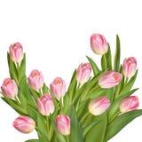 Букет тюльпанов 10 eps Стоковые Фото