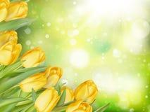 Букет тюльпанов 10 eps Стоковое Изображение