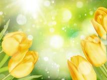 Букет тюльпанов 10 eps Стоковая Фотография