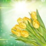 Букет тюльпанов 10 eps Стоковое фото RF