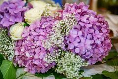 Букет фиолетовых гортензий Концепция праздник, weddin Стоковое Фото